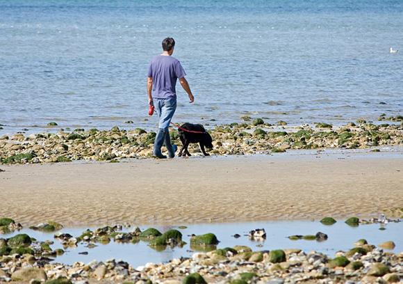 Viaja en AVE a las mejores playas en las que puede estar tu perro