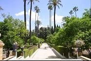 Nuevos Aves a Alicante y Sevilla